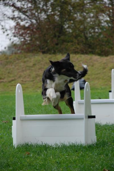 flyball200709