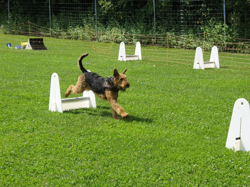flyball2009002