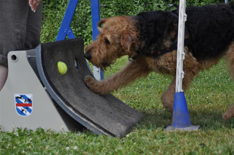 flyball2010037